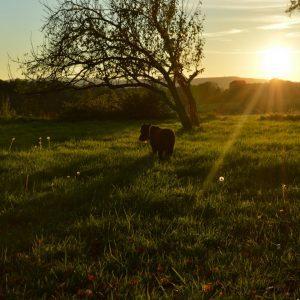 Ibiza-hond-blog