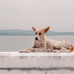 Ibiza-hond-asiel-blog
