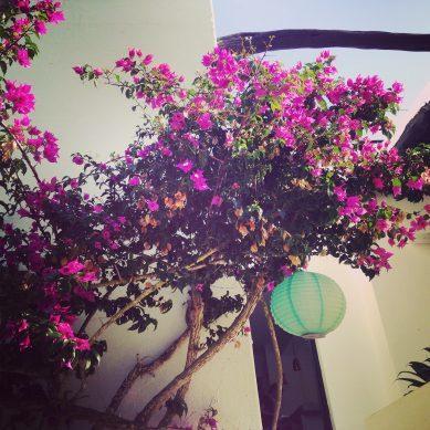 Ibiza als pensioen…waarom niet NU al genieten?