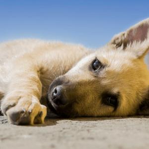 Ibiza-honden-asiel-mustdo-asiel-tips