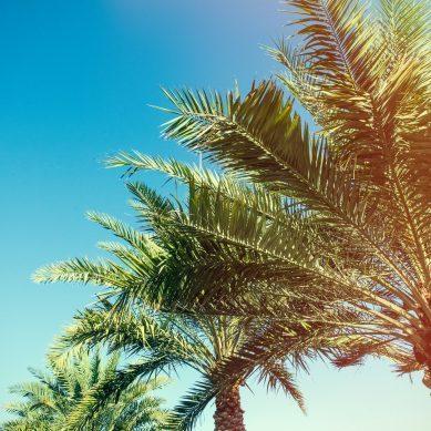 In 5 simpele stappen naar mega Ibiza-succes!